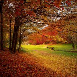 urs si meditatie pentru atragerea de evenimente pozitive in viata, Predeal 22-23 Octombrie 2016