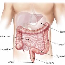 Sistemul nervos enteric (al intestinelor) si meditatia de Stefan Pusca